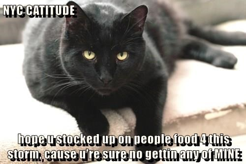 NYC CATITUDE  hope u stocked up on people food 4 this storm, cause u're sure no gettin any of MINE