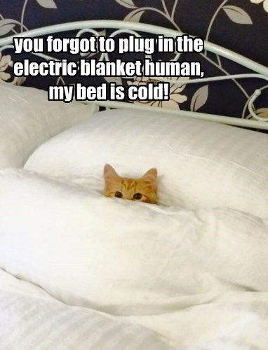 you forgot to plug in the electric blanket human, my bed is cold!