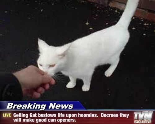 Breaking News - Ceiling Cat bestows life upon hoomins.  Decrees they will make good can openers.