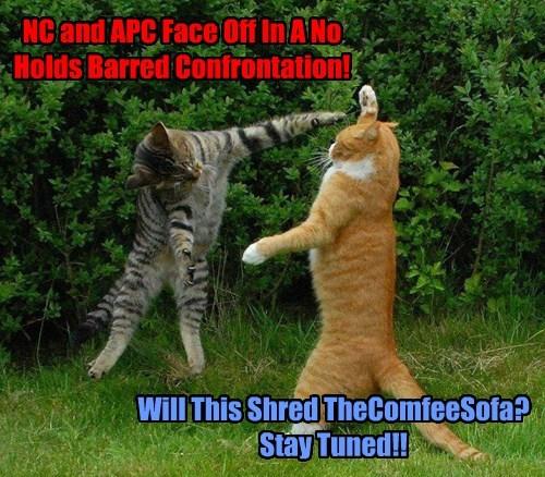 Cat Fight! Cat Fight!!