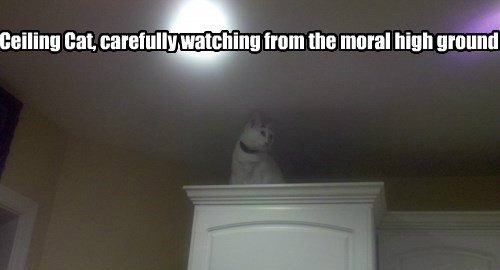Ceiling Cat is watching