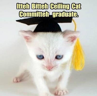Itteh  Bitteh  Ceiling  Cat  Committeh   graduate.