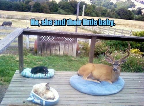 My, How Babies Grow!