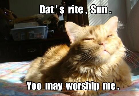 tabby,worship,sun,Cats