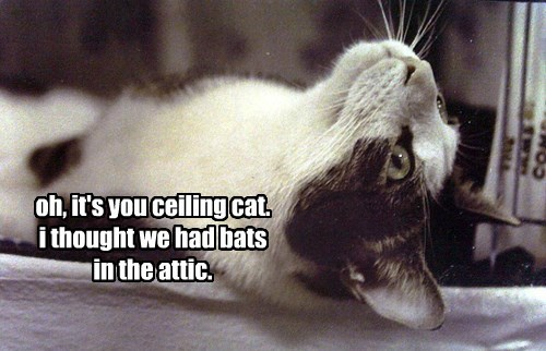 oh, it's you ceiling cat. i thought we had bats in the attic.