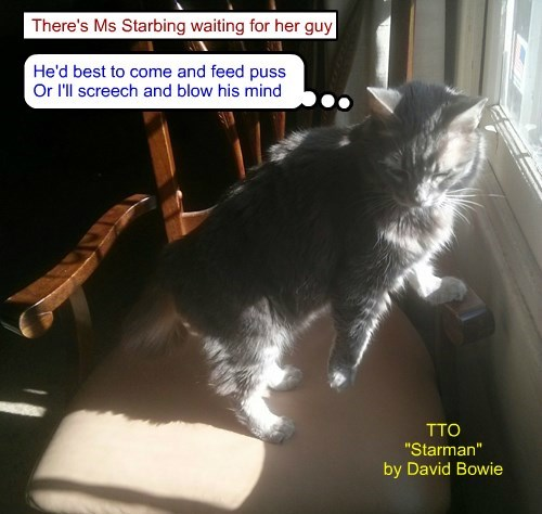 """""""Little Miss Starving II"""" (TTO """"Starman"""" by David Bowie)"""