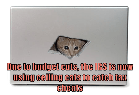 Due to budget cuts, the IRS is now using ceiling cats to catch tax cheats