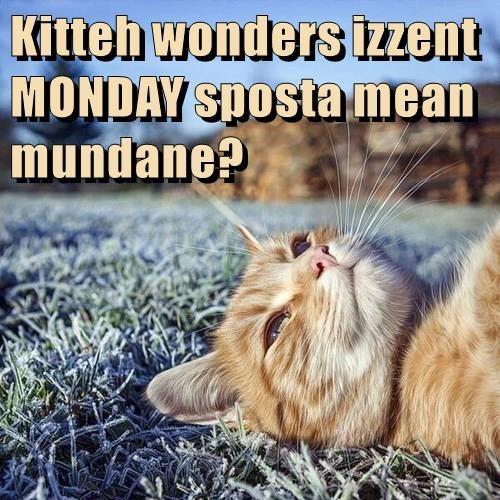 Kitteh wonders izzent MONDAY sposta mean mundane?