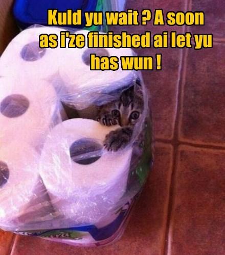 shredded,cars,toilet paper