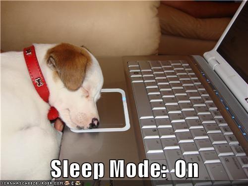 dogs,nap,the internets,sleep