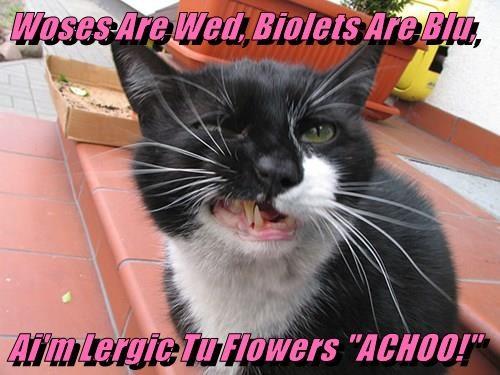 "Woses Are Wed, Biolets Are Blu,  Ai'm Lergic Tu Flowers ""ACHOO!"""