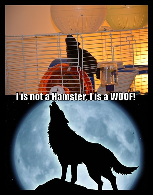 Is is not a Hamster, I is a WOOF!