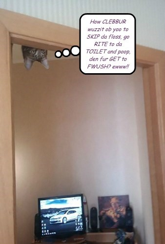 Kitteh spies ur baffroom habbits.... Be SHORE & WORSH ur HANDS now, y'all HEAR?!!