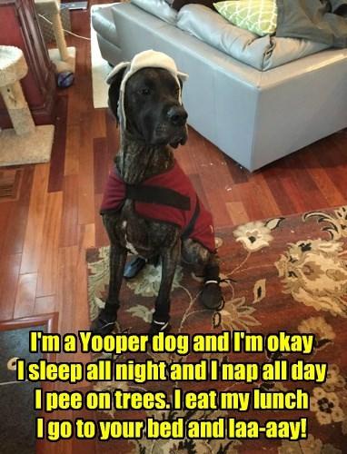 Yooper dog, a la Monty Python