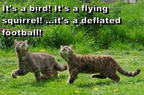 It's a bird! It's a flying squirrel! ...it's a deflated football!