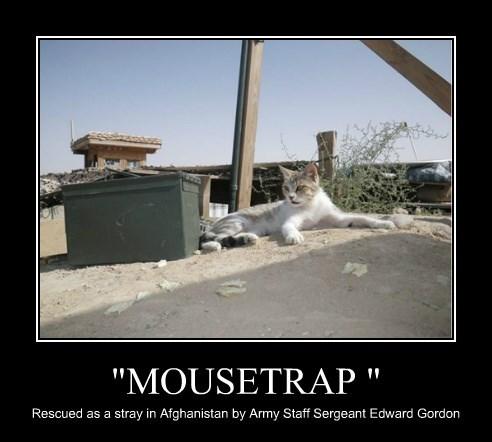 """""""MOUSETRAP """""""