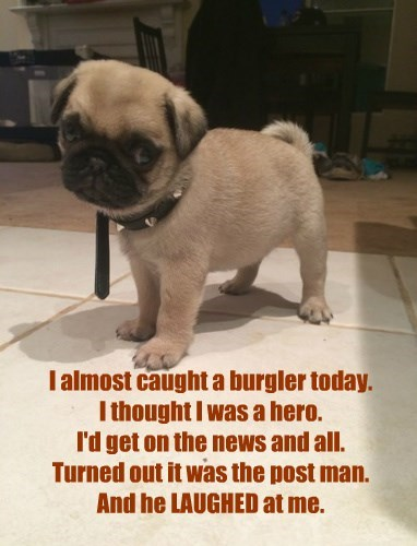 I almost caught a burgler today. I thought I was a hero. I'd get on the news and all. Turned out it was the post man. And he LAUGHED at me.