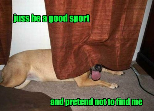 dogs,hide and seek,Nailed It