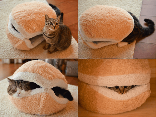 burger,cats are weird,Cats