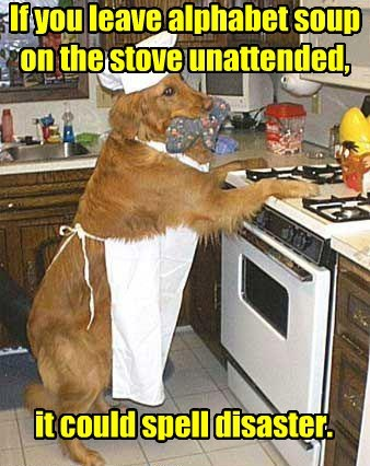 dad joke,dogs,cooking,advice,soup