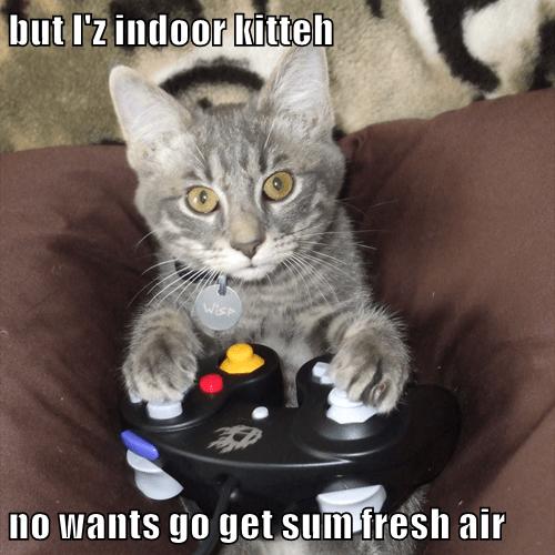 but I'z indoor kitteh  no wants go get sum fresh air