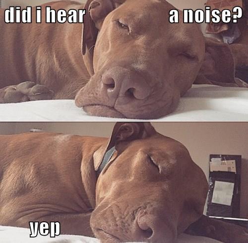 dogs,guard,good boy,noise