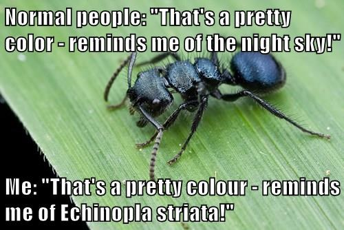 """Normal people: """"That's a pretty color - reminds me of the night sky!""""  Me: """"That's a pretty colour - reminds me of Echinopla striata!"""""""