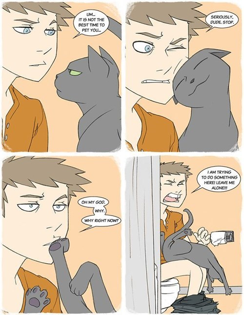 Cat Logic is a Peculiar Thing
