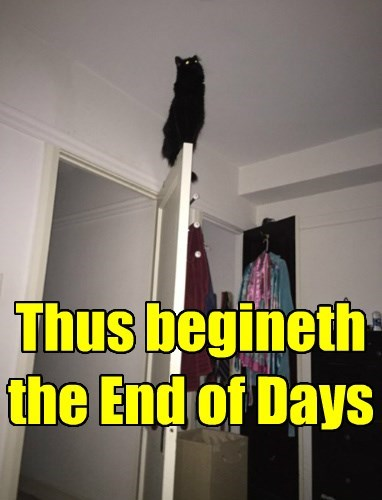 Cats,basement cat,Armageddon,The End