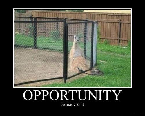llama,wtf,funny
