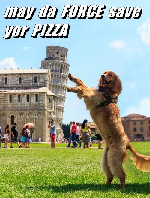 dogs,star wars,the force,pizza