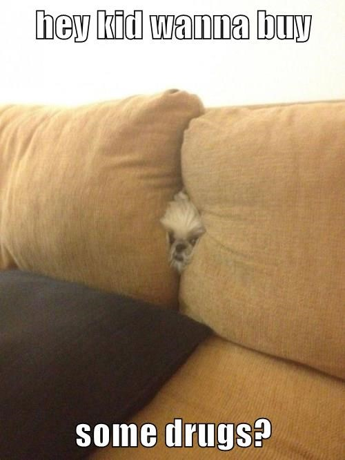 dogs,drugs,stuck,couch,hide