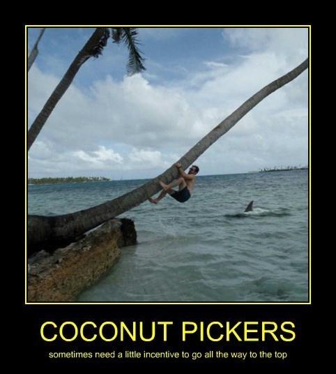 coconut,failure,bad idea,shark,tree,funny