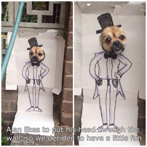 dogs,sir,suit