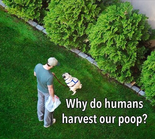 dogs,wtf,pug,conspiracy,poo,why