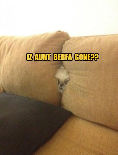 dogs,stuck,hide