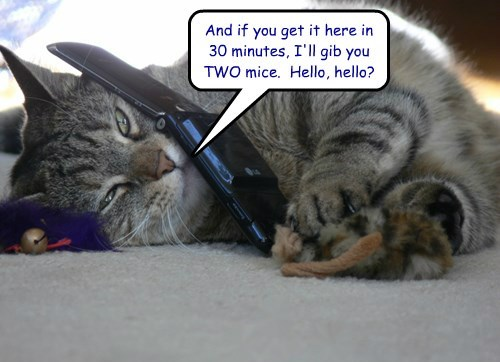 And if you get it here in 30 minutes, I'll gib you TWO mice.  Hello, hello?