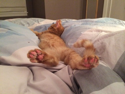 cute baby animals kitty toes