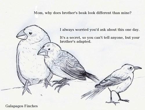 So Began the X-Birds