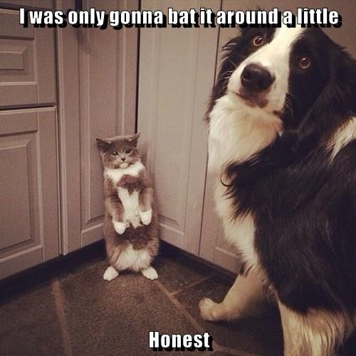dogs,fight,Cats
