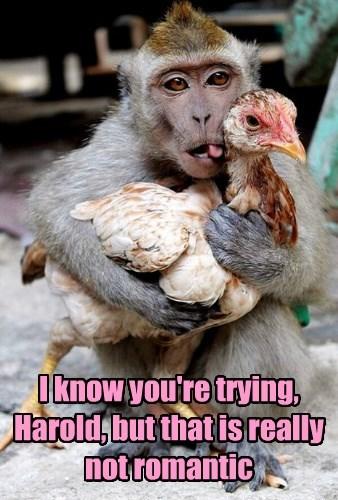 romance,valentine,monkey,bird