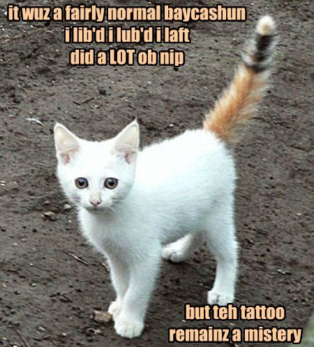 what happened,tattoo,tail,Cats,vacation