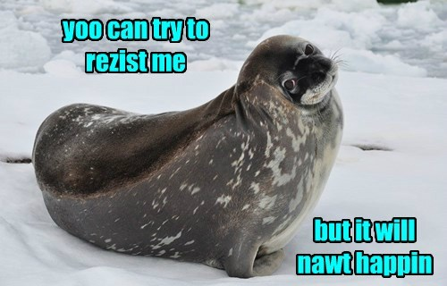seal,irresistible,squee