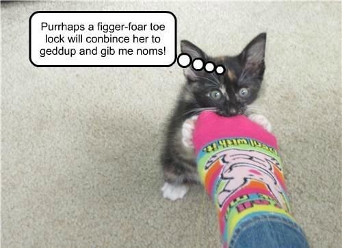 Sock and Aww