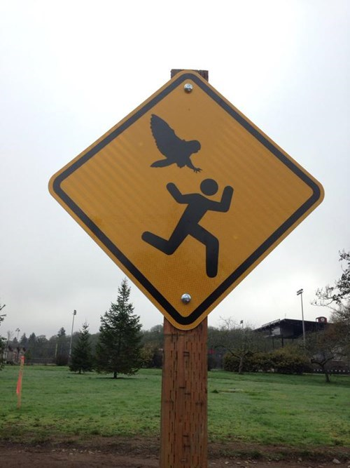 "This Oregon Park Needs its Own ""Aggressive Owl"" Warning Sign"
