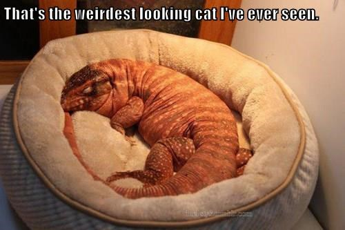 That's the weirdest looking cat I've ever seen.