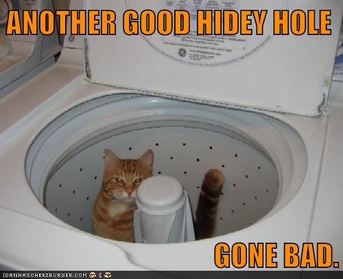 ANOTHER GOOD HIDEY HOLE  GONE BAD.