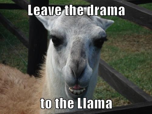 Leave the drama  to the Llama
