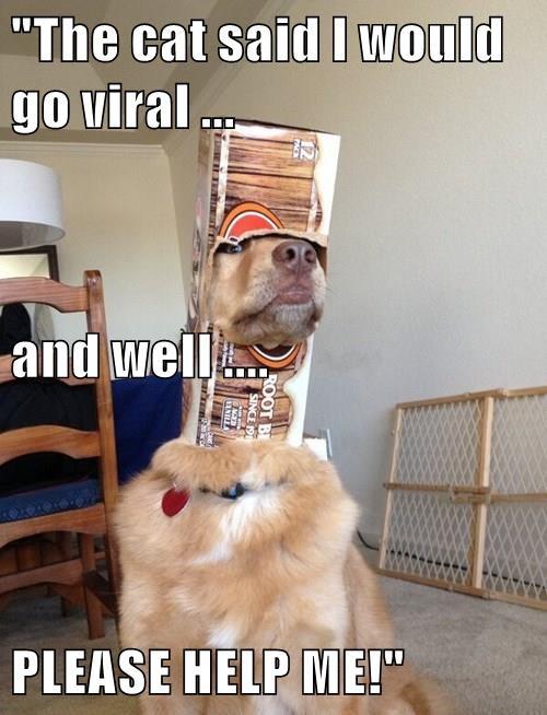 box,dogs,help,stuck