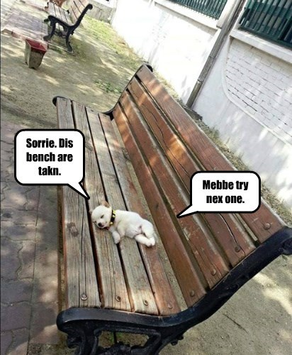 dogs,puppy,squee,bench